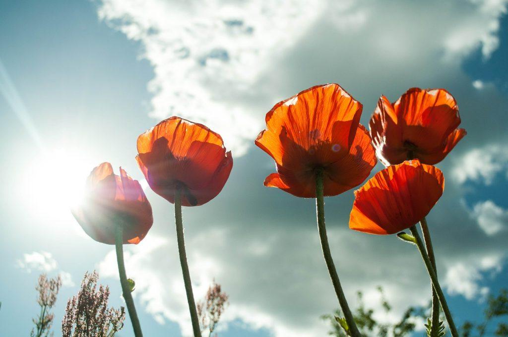 Kwiaty na tle nieba